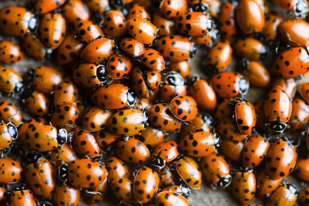 What to do in Muir Woods - ladybugs