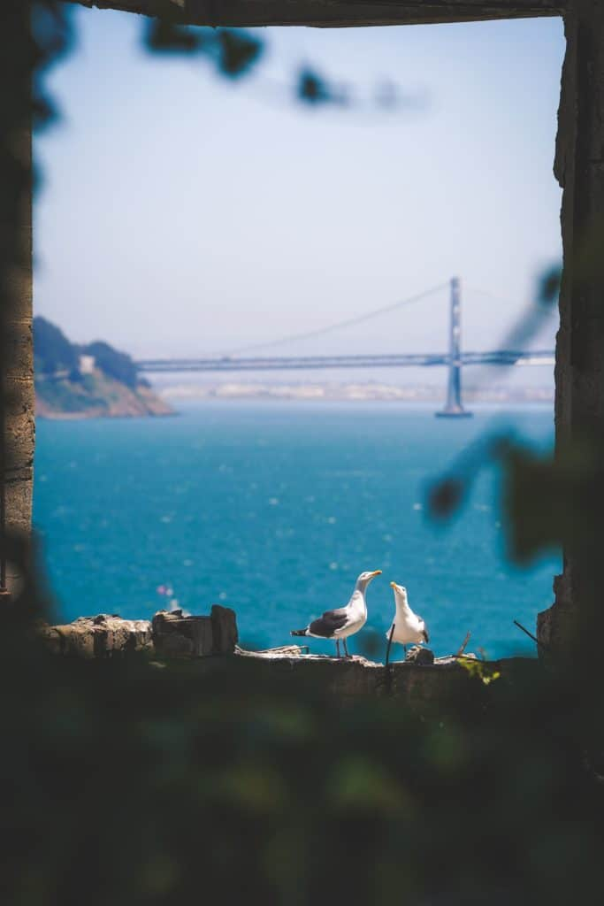 Facts about Alcatraz, White seagulls on the rock,